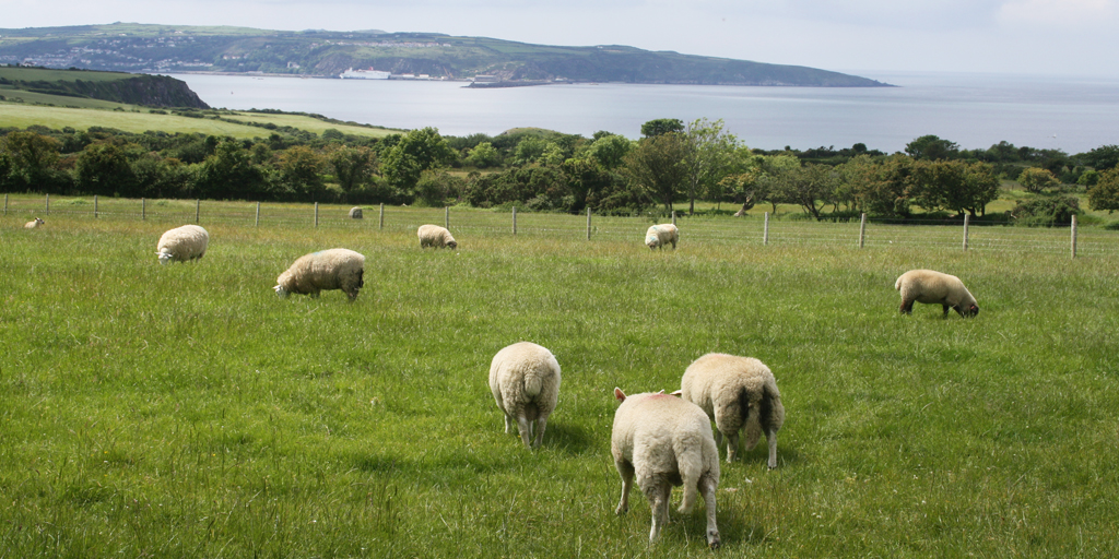 Welsh single farm payment 2020